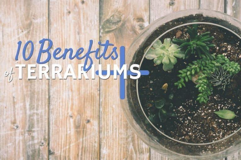 Benefits of Terrariums