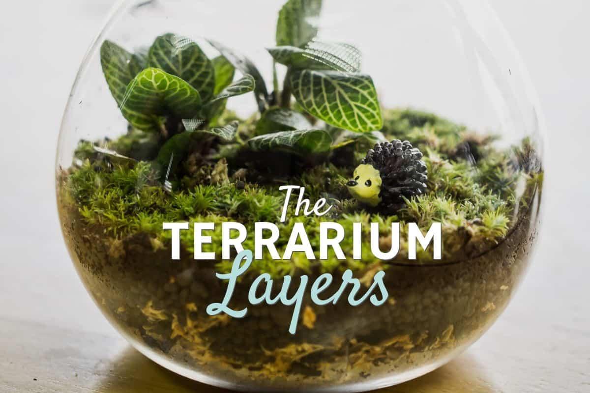 Terrarium Layers A Step By Step Guide Terrarium Tribe