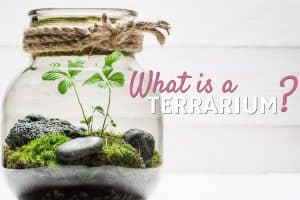 What is a Terrarium