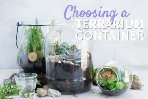 Choosing a terrarium container