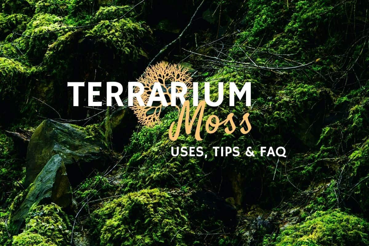 Terrarium Moss The Secret To A Vibrant Terrarium Terrarium Tribe