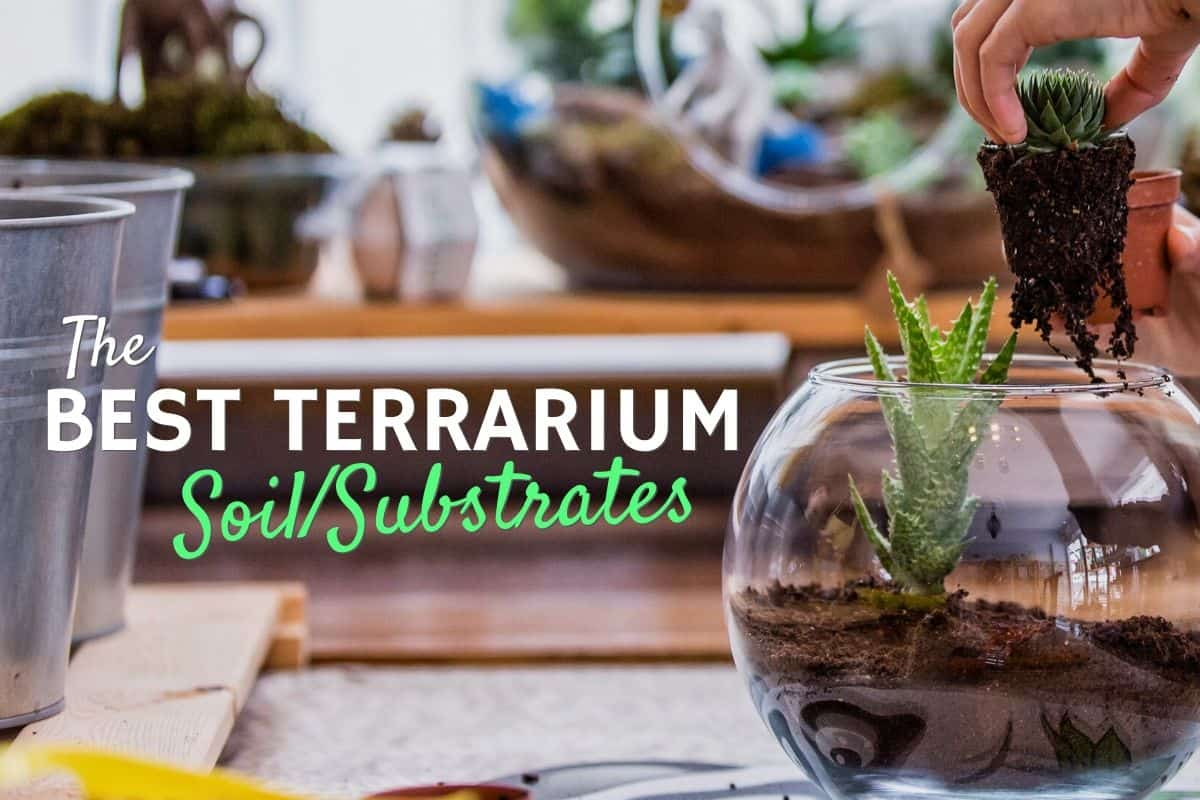 Terrarium Substrate Soil Which Is Best For You Terrarium Tribe