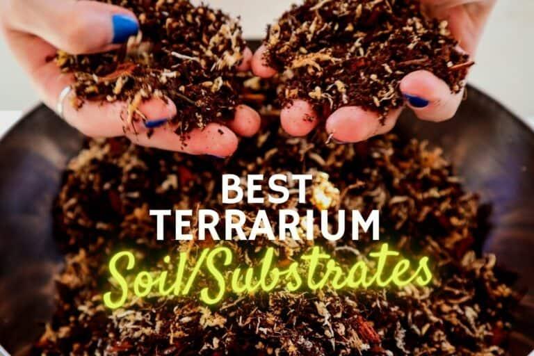 Terrarium soil & substrates