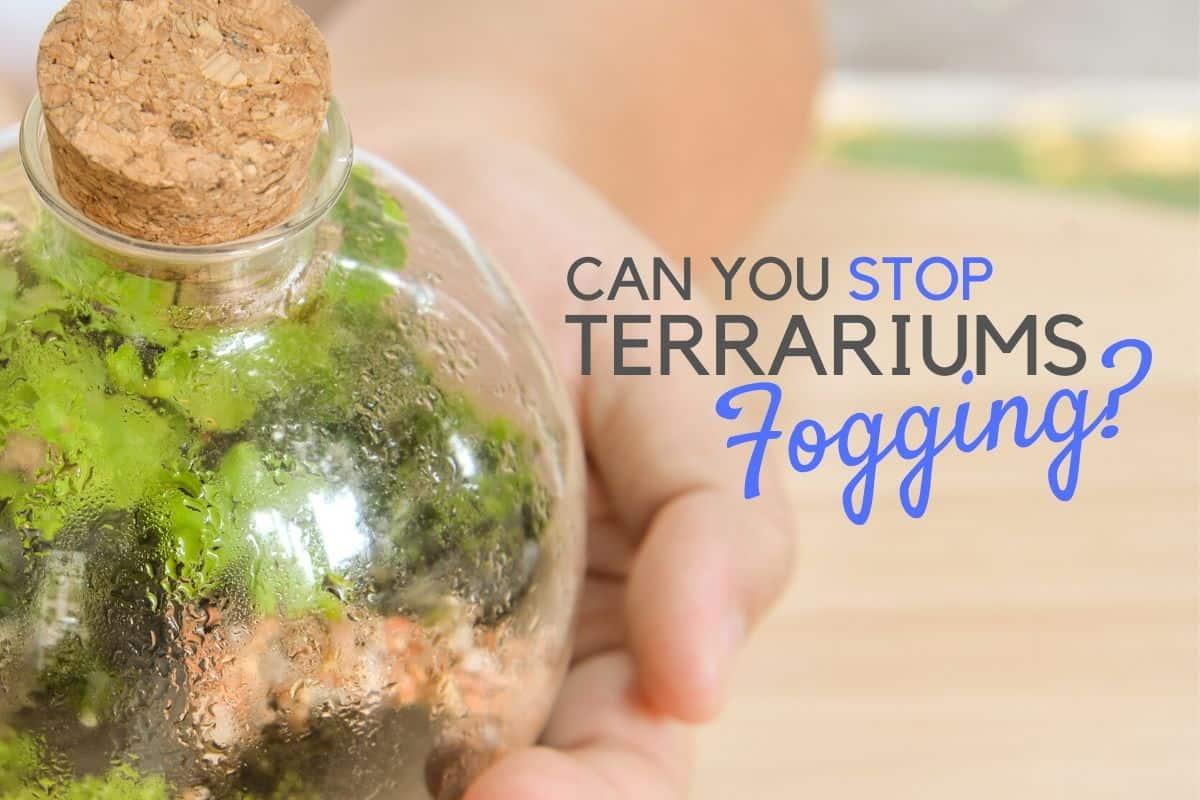 Can You Reduce (or Prevent) Terrarium Condensation?