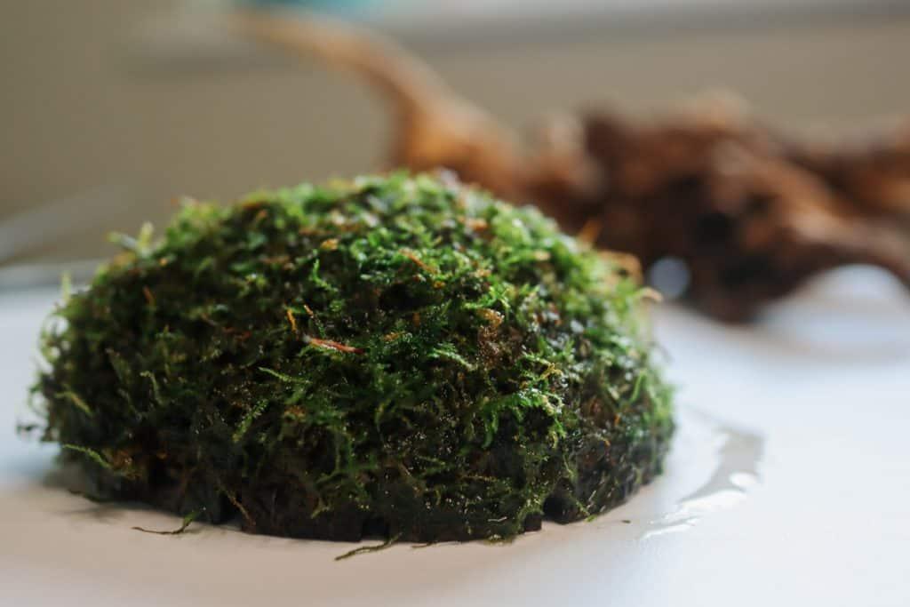 Java moss half coconut