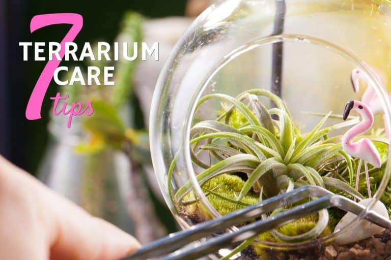 Terrarium Care Tips