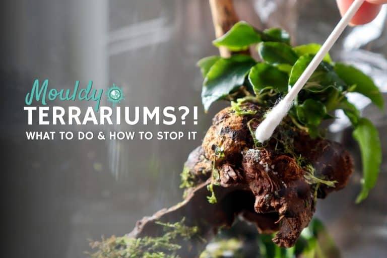 Terrarium Mould