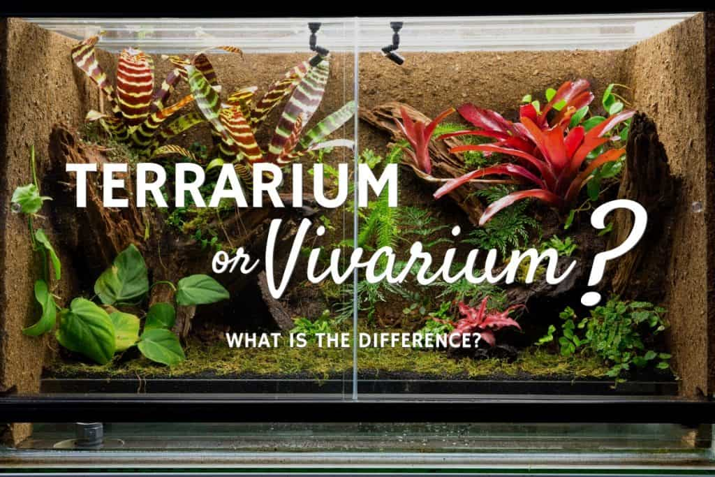 """Terrarium vs Vivarium (+ Other """"Ariums"""") Explained"""