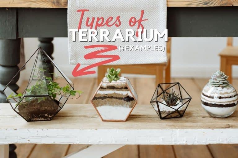 Types of Terrarium
