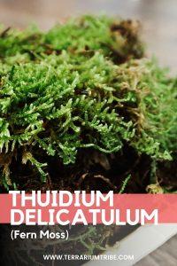Thuidium Delicatulum (Fern Moss)