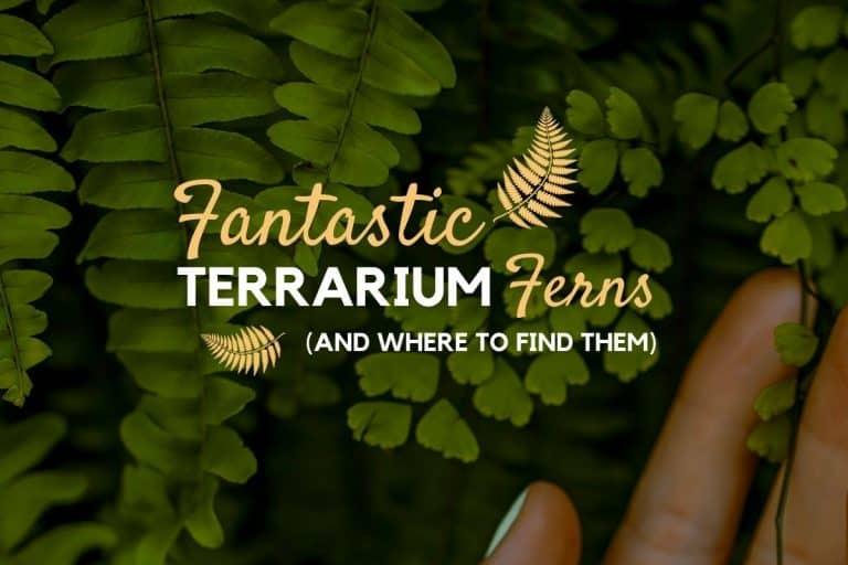 Terrarium Ferns