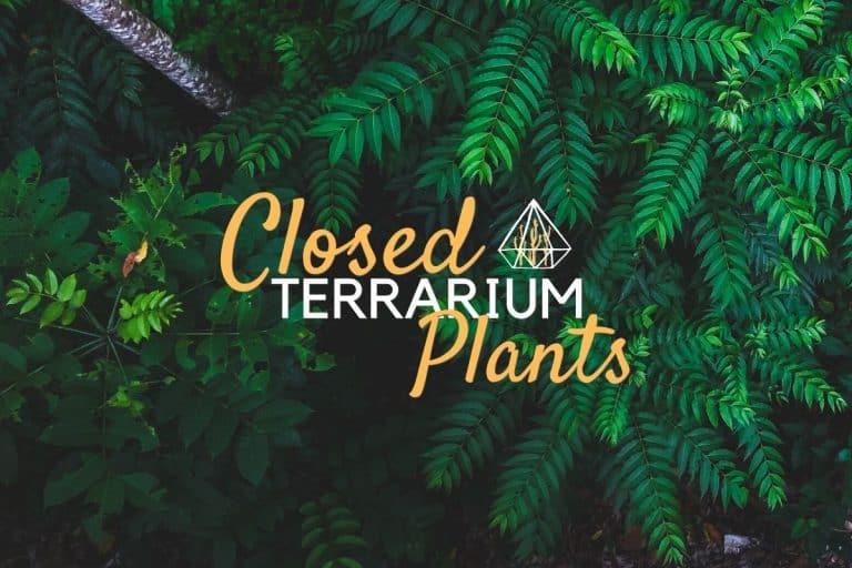 Closed Terrarium Plant