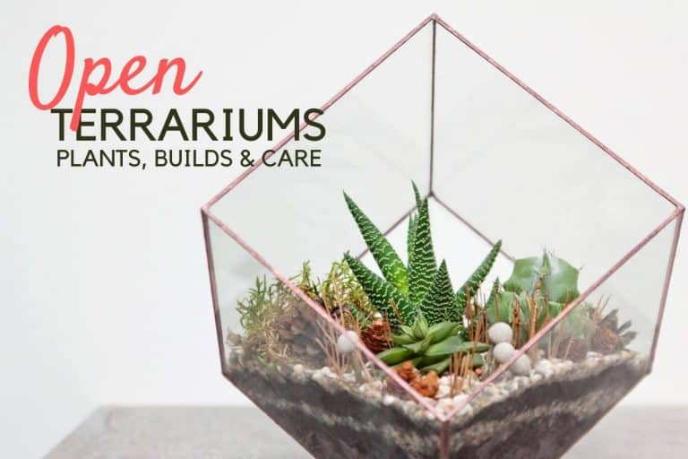 Open Terrariums