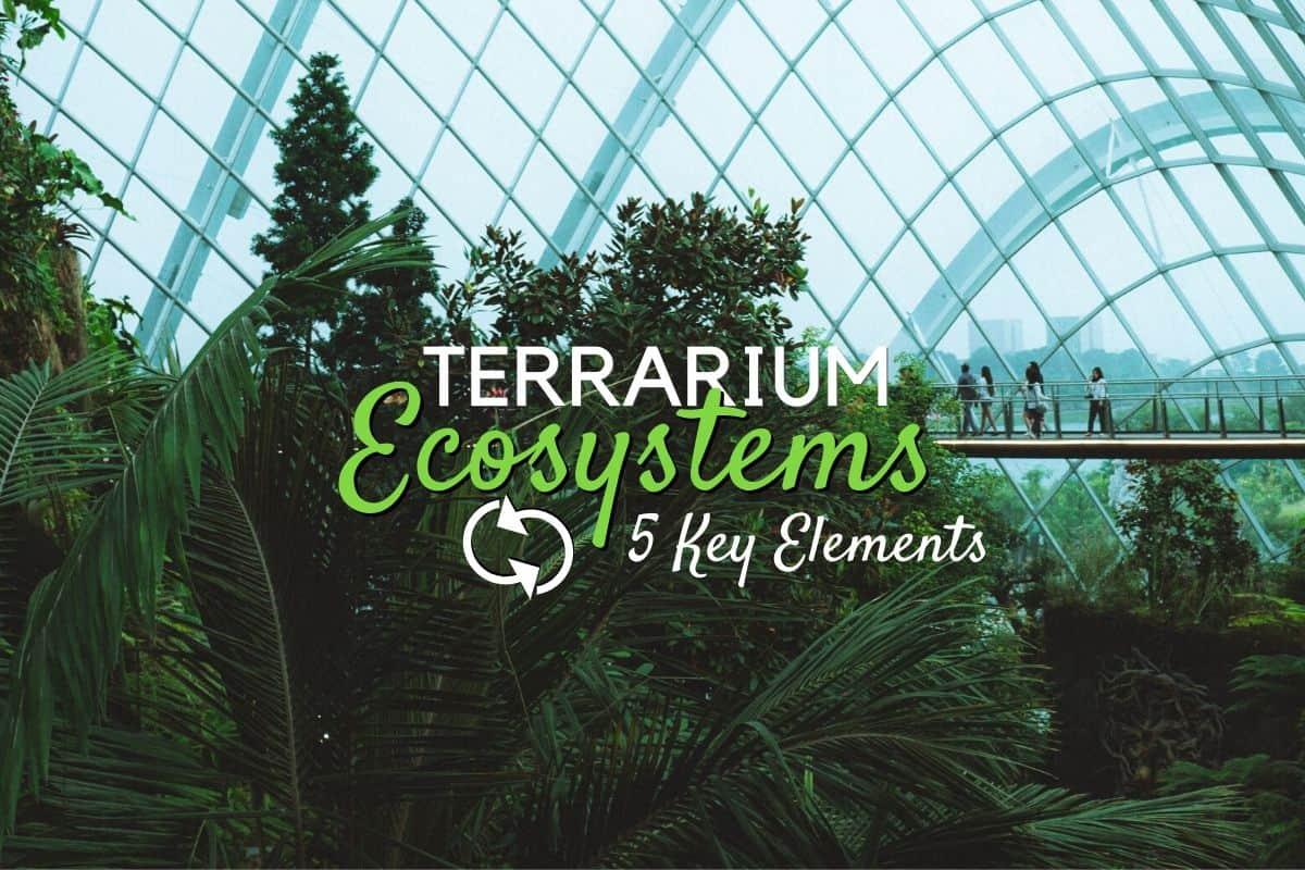 5 Key Elements To A Terrarium Ecosystem Self Sustaining Terrarium Terrarium Tribe