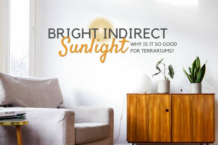 Bright Indirect Light
