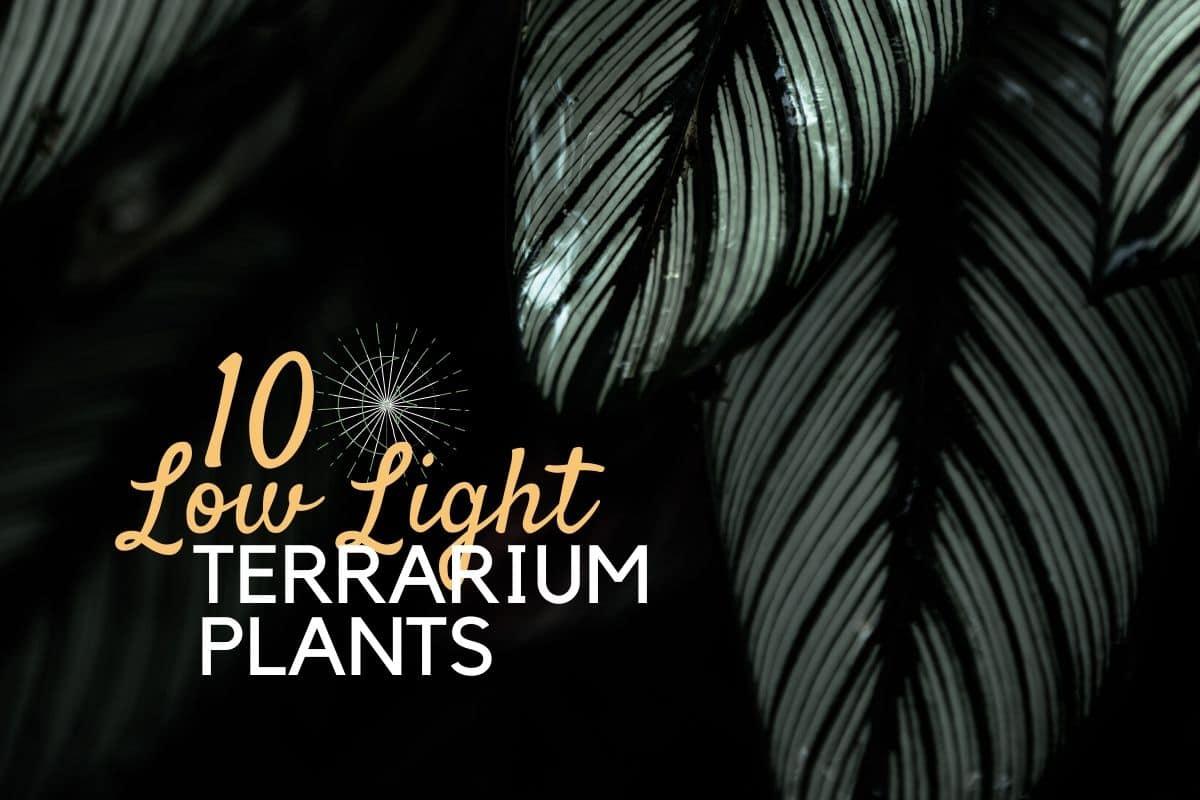 Low Light Terrarium Plants