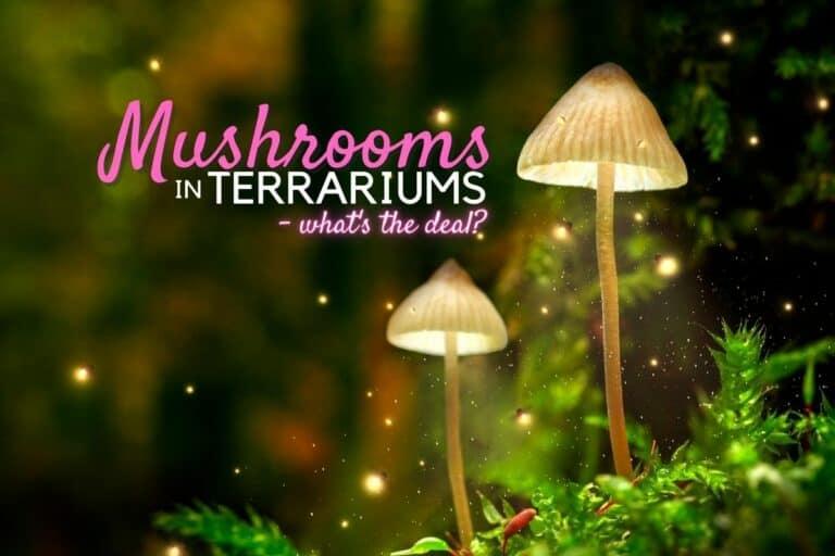 Terrarium Mushrooms