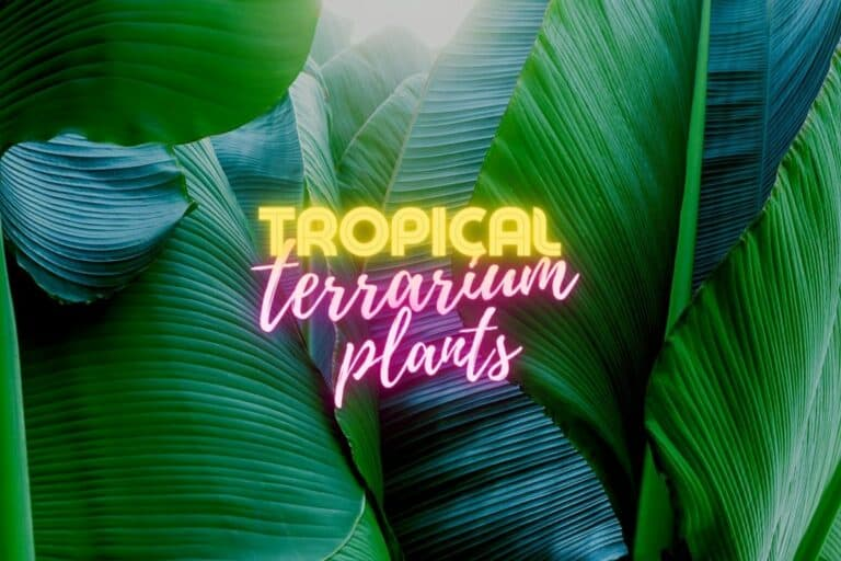 Tropical Terrarium Plants