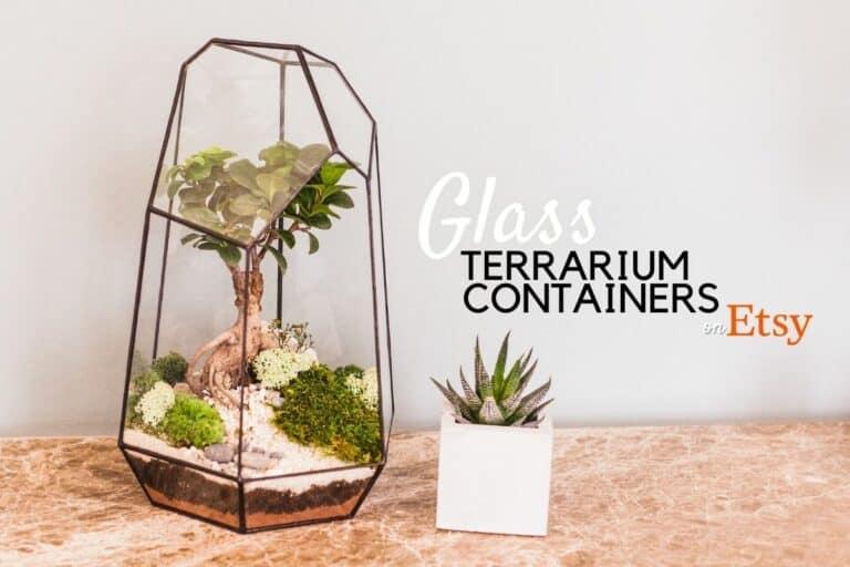 Glass Terrariums on Etsy