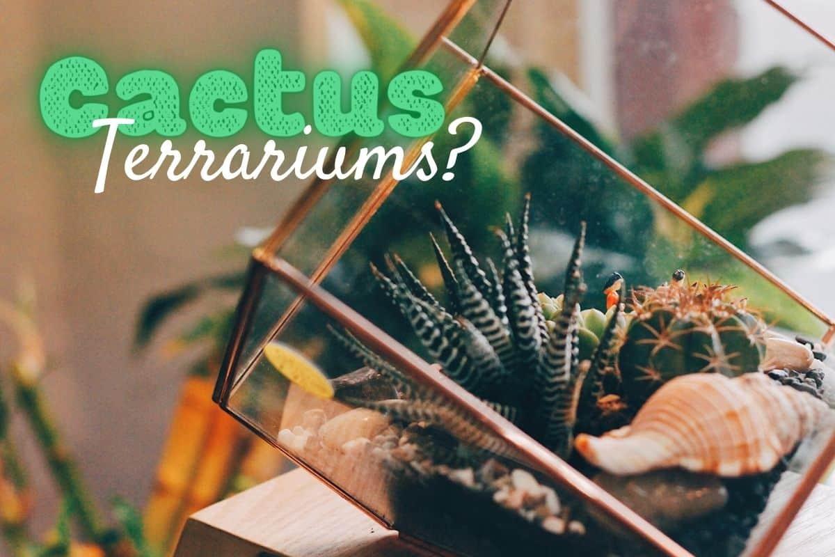 How To Make A Cactus Terrarium The Prickly Details Terrarium Tribe