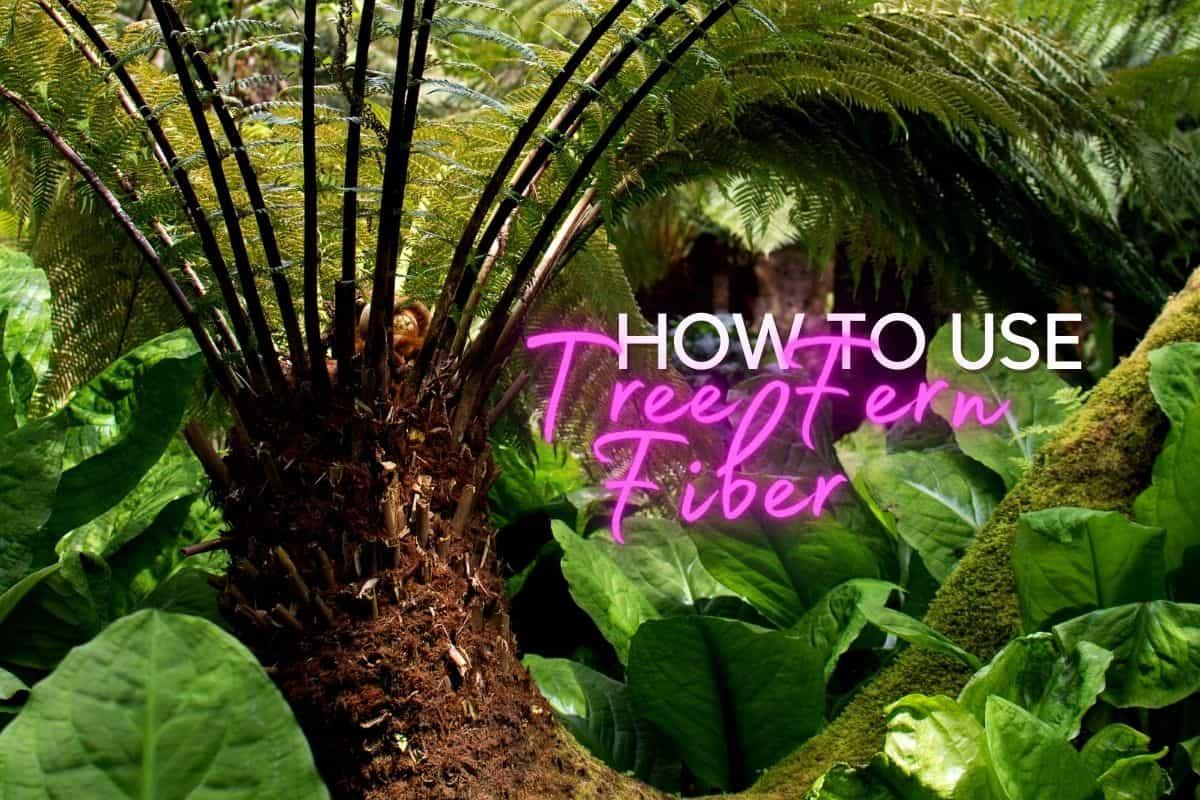 Tree Fern Fiber