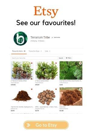 Terrarium Tribe Etsy favourites