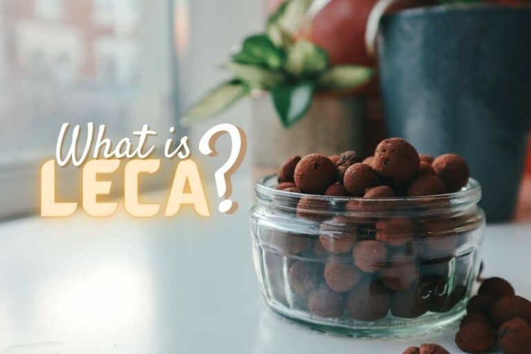 What is LECA