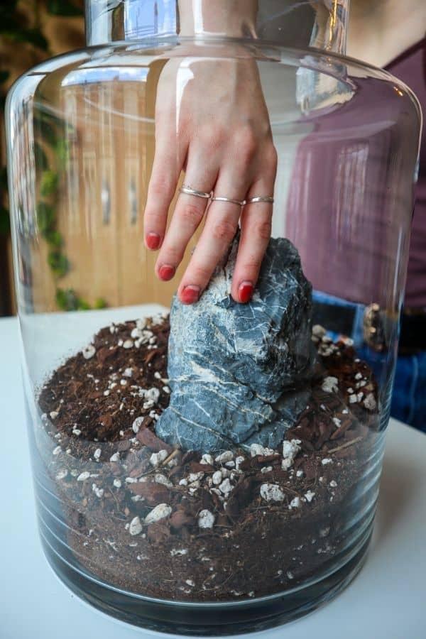 seiryu stone in a terrarium