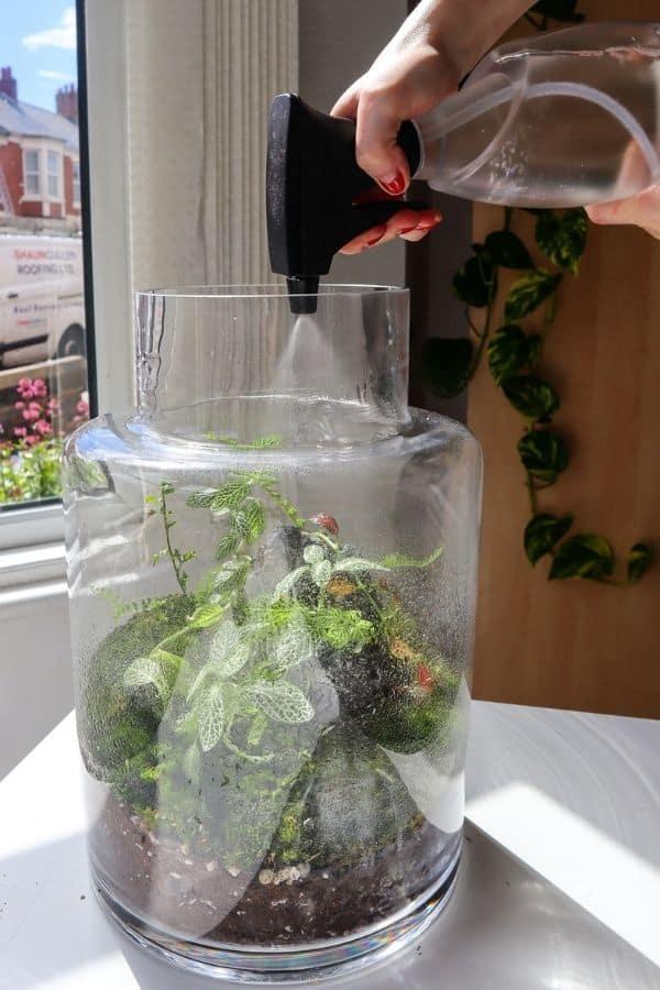watering a terrarium