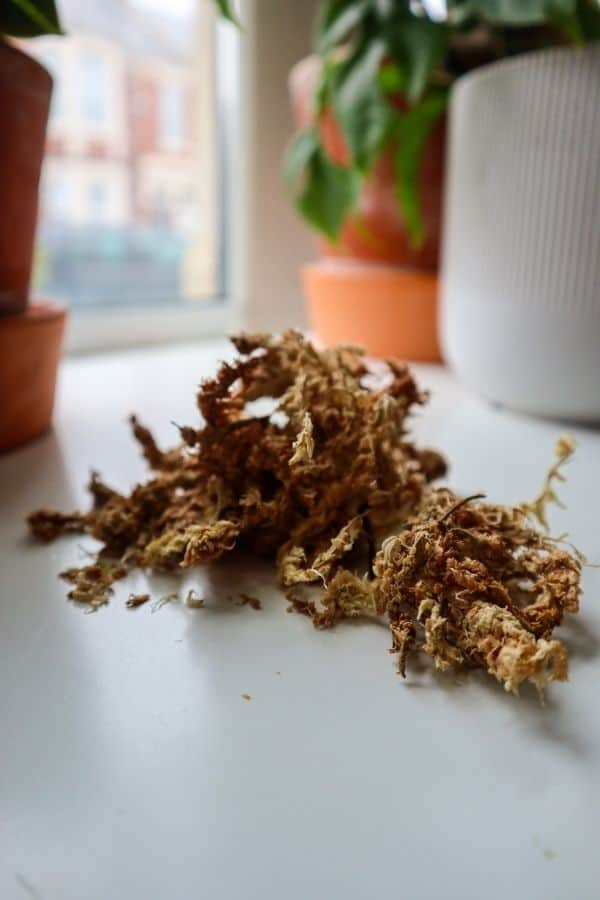 Preserved sphagnum moss