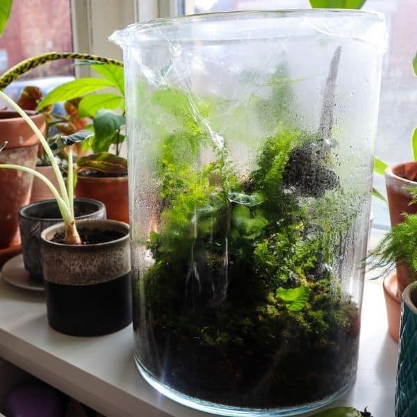 Humid terrarium