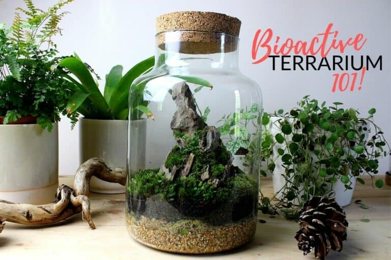Bioactive Terrarium