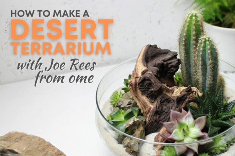 How to make a desert terrarium