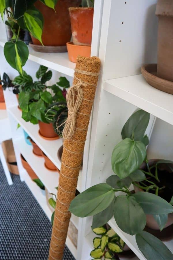 Coco coir moss pole