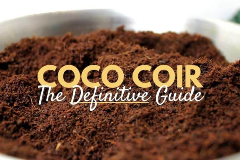 coconut coco coir