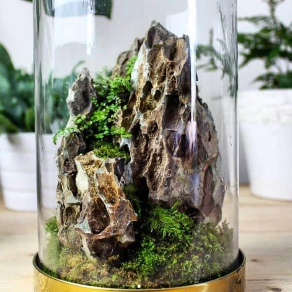 dragon stone moss terrarium