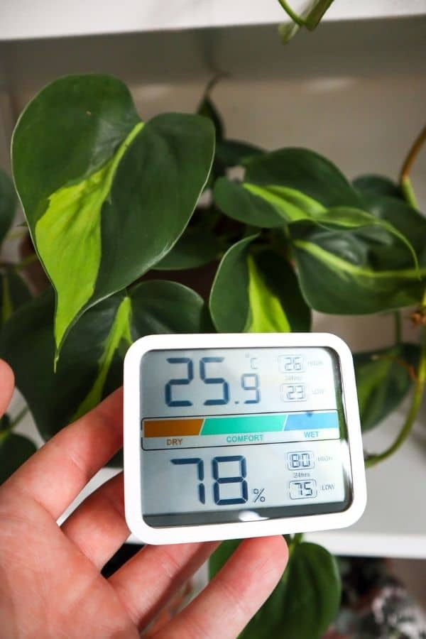 Philodendron Brasil temperature and humidity