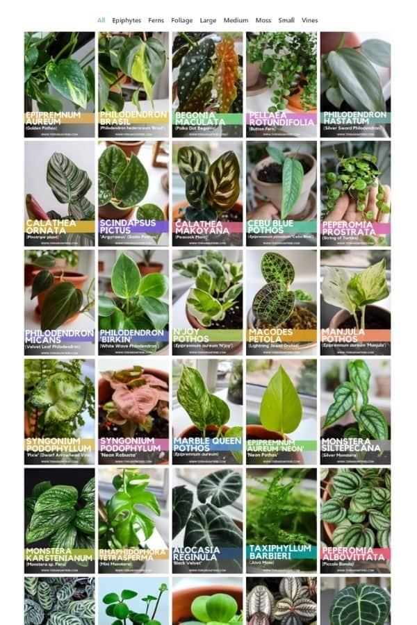 Terrarium Plant Index