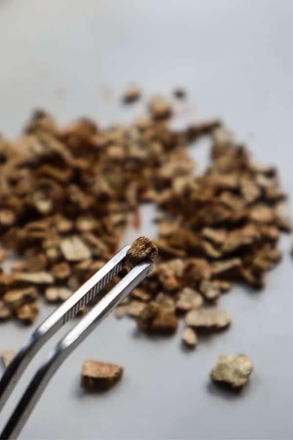vermiculite up close