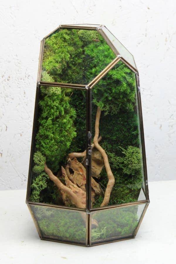 Preserved moss terrariums