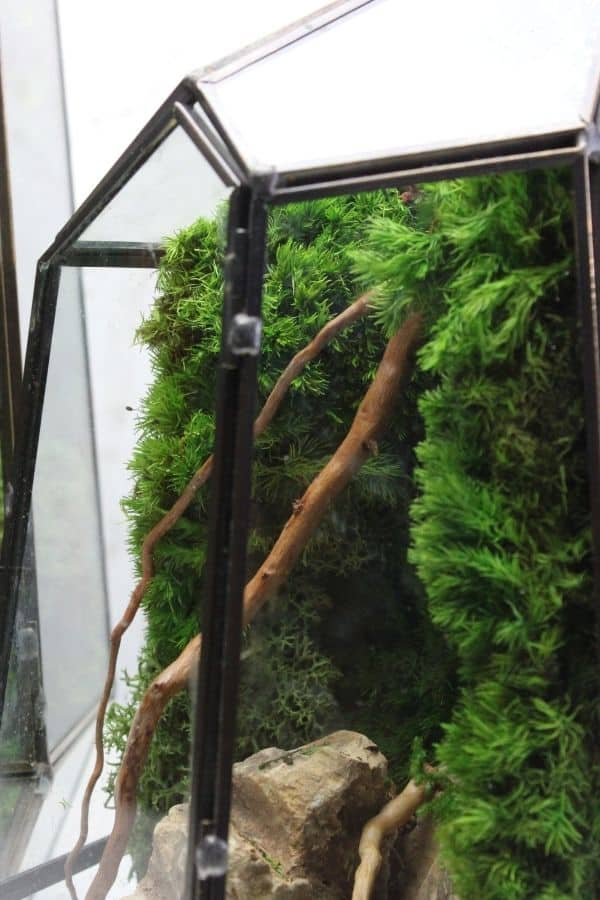 preserved moss terrarium