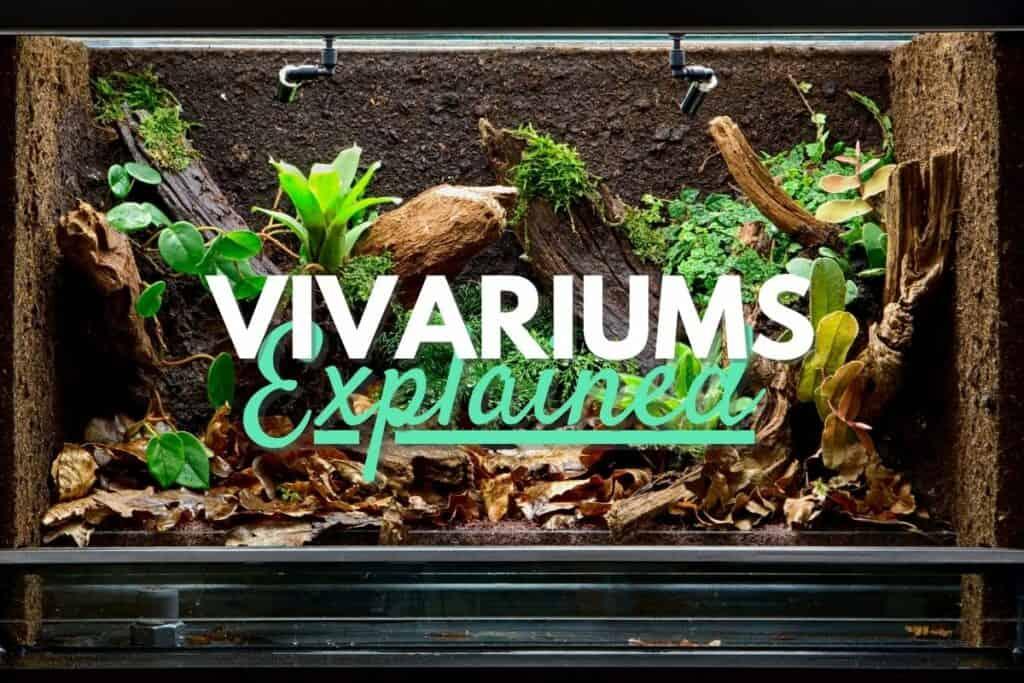 Vivariums explained